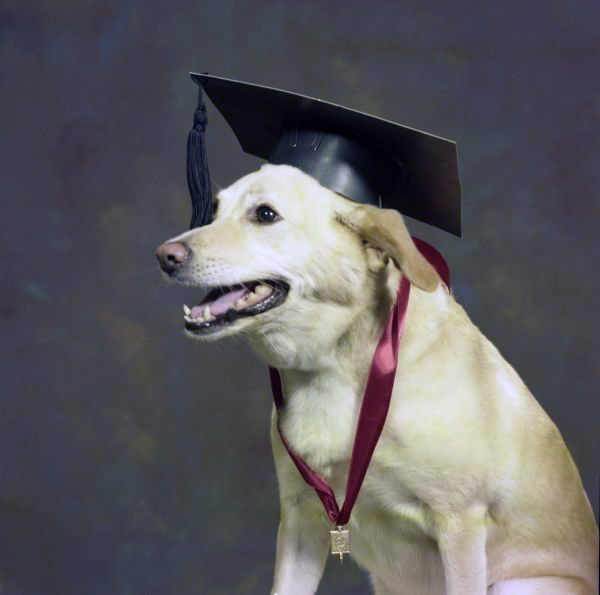 Dog with graduation cap